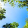 Die Sonne leuchtet durch die kronen hoher Bäume